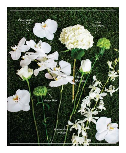 Editorial 2015 Spring:Summer Issue-FlowerPicking_006
