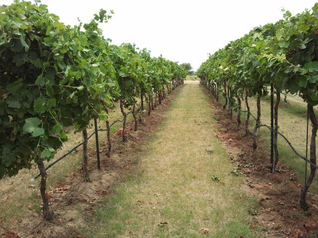 Clauren Ridge Vineyard and Winery - Oklahoma Wedding Venues